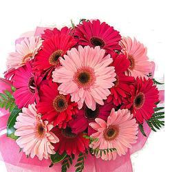 15 Pink Gerberas for Agra