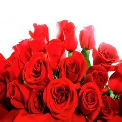 17 Red Roses Bouquet for Noida