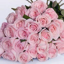 24 Pink Roses Bouquet for Delhi