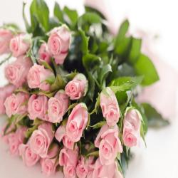25 Baby Pink Roses Bouquet for Vasco Da Gama