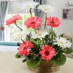 Arrangement of Pink and White Gerberas