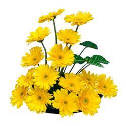 Basket of 15 Yellow gerberas for Baroda