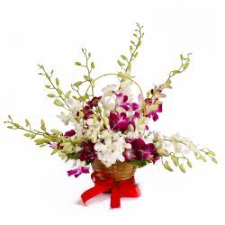 Basket of Dozen Multi Color Orchids for Bankura