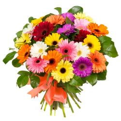 Bouquet of 25 Multi Color Gerberas for Vasco Da Gama