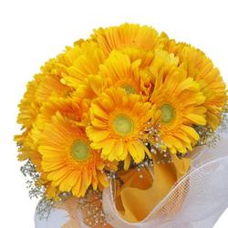 Bouquet of Dozen Yellow Gerberas for Jaipur