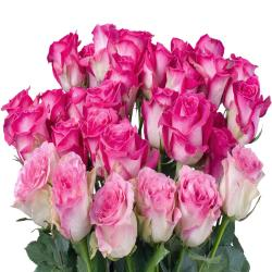 Bouquet of Fresh 28 Pink Roses for Alappuzha