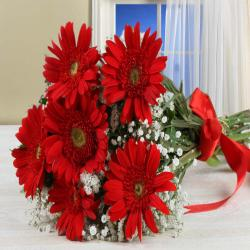 Bouquet of Red Gerberas Cellophane Wrapped for Thanjavur