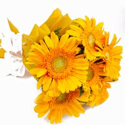 Bouquet of Six Yellow Color Gerberas in Tissue Wrapping for Noida