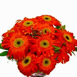 Bright Orange Gerberas Bouquet for Hyderabad