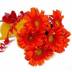 Bunch of 6 Orange Gerberas in Tissue Wrapping for Chandigarh