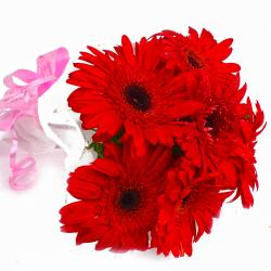 Bunch of 6 Red Gerberas in Tissue Wrapping for Chandigarh