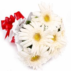 Bunch of 6 White Gerberas in Tissue Wrapping for Chandigarh