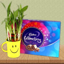 Cadbury Celebration chocolate Box With Good Luck Bamboo Plant for Hospet