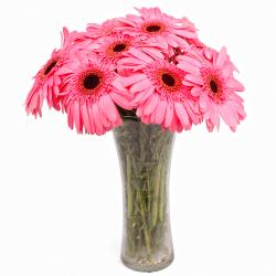Classic Vase of 10 Pink Gerberas for Manipal