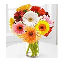 Dozen Multi color Gerberas in vase for Indore