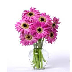 Dozen Pink Gerberas In Glass vase for Agra