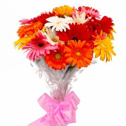 Eighteen Multi Color Gerberas Bouquet Cellophane Wrapped for Indore