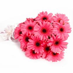 Fifteen Pink Gerberas with Tissue Packing for Imphal