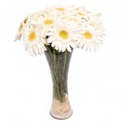 Fifteen White Gerberas in Glass Vase for Dewas