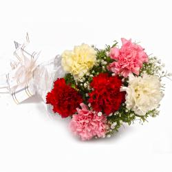 Fresh 6 Colorful Carnations in Cellophane Packing for Moga
