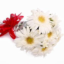 Fresh 6 White Gerberas Hand Tied Bunch for Dewas