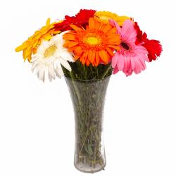 Glass Vase of Ten Multi Color Gerberas for Manipal