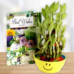 Good Luck Bamboo Plant with Best Wishes Card. for Coimbatore