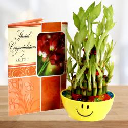Good Luck Bamboo Plant with Congratulations Greeting Card. for Coimbatore