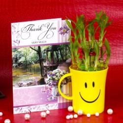 Good Luck Bamboo Plant with Thank you Card. for Coimbatore