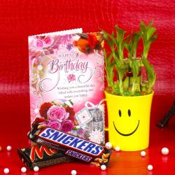 Good Luck Plant,Birthday Card and Chocolates for Pune