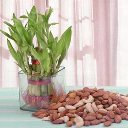 Good Luck Plant with Assorted Dry fruits for Belgaum