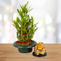 Laughing Buddha with Good Luck Bamboo Plant for Asansol