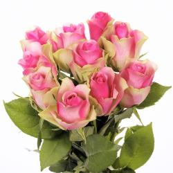 Lovely Pink Roses Bunch for Thanjavur