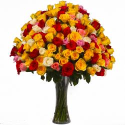 Multi Color 100 Roses Arranged in a Vase