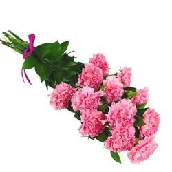 Pink Carnation Bouquet for Noida