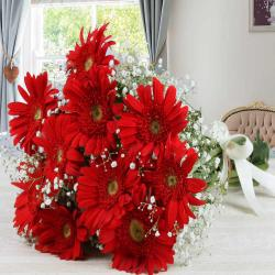 Pretty Red Gerberas Bouquet for Pune