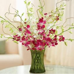 Purple Orchids In Glass Vase