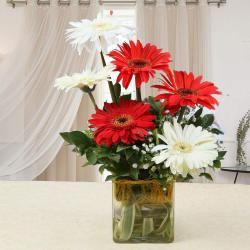 Red and White Gerberas in a Glass Vase for Kolkata