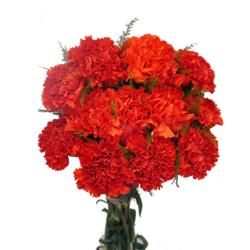 Red Carnation Bouquet for Pune