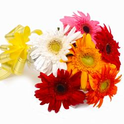 Six Mix Color Gerberas with Cellophane Packing for Dewas