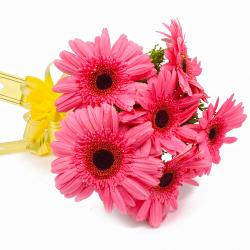 Six Pink Gerberas with Cellophane Wrapping for Dewas
