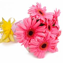 Six Pink Gerberas with Tissue Wrapping for Chandigarh