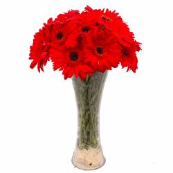Ten Red Gerberas in Classic Vase for Manipal