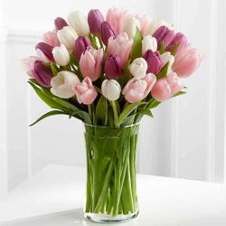 Tulips Arranged in a Vase for Jalandhar