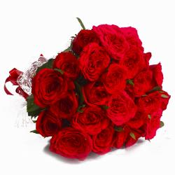 Twenty Four Red Roses in Cellephane Wrapped for Kakinada
