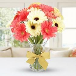 Twin Color Gerberas in Vase for Bangalore