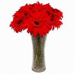Vase Arrangement of 10 Red Color Gerberas for Gurgaon